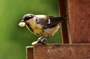 鳥と食べ物