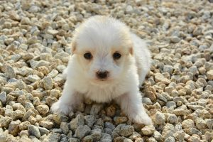 フカフカの子犬