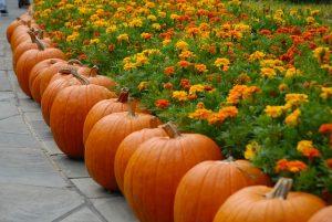 pumpkin秋
