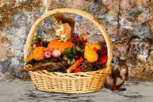 秋の食材とりすたち
