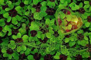luck-四つ葉クローバー
