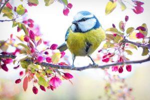 spring-bird-