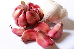 garlic-