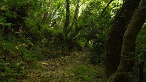 trees-