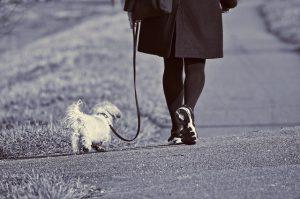 ワンコと散歩
