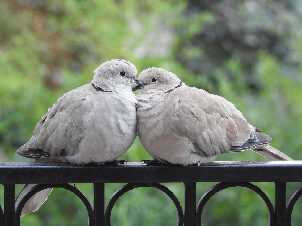 仲良し小鳥