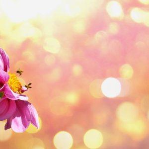 flower光エネルギー