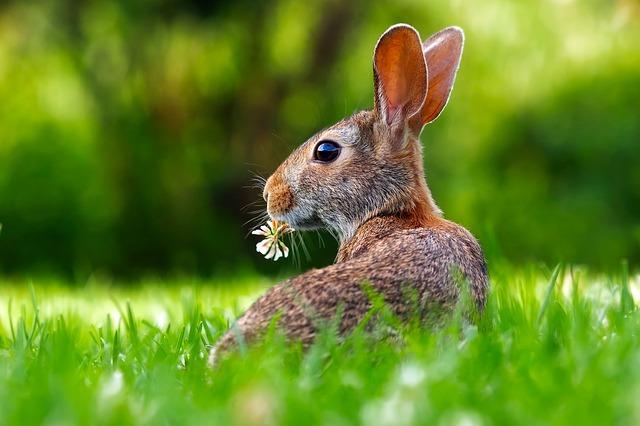 rabbitふんわり毛