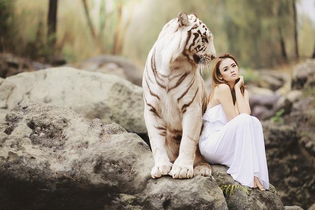 ホワイトタイガーと美女